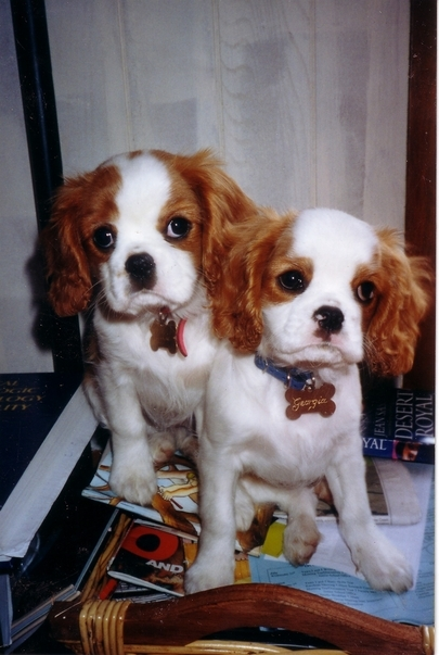 Young_pups_large