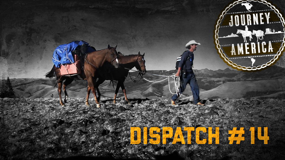 Dispatch_14