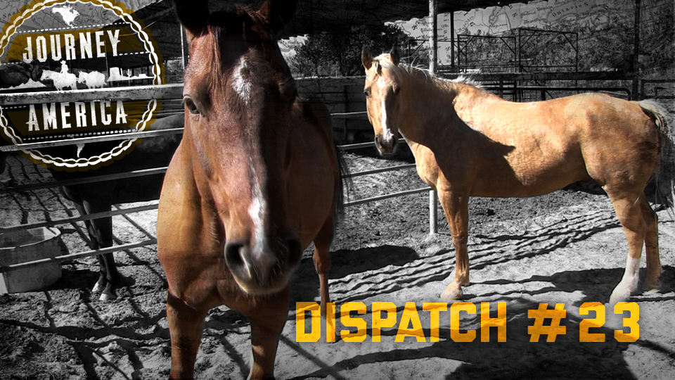 Dispatch_23
