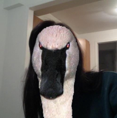 1355184495-the-swan20121211-7-1lohm72