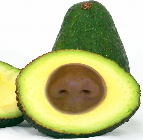 1375736372-avocado20130805-7-15sezwb