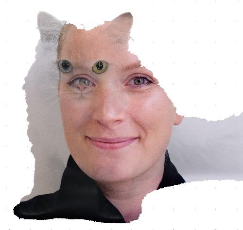 1416892679-netart-cat-hannahmoriarty1220141125-5-wloxp5