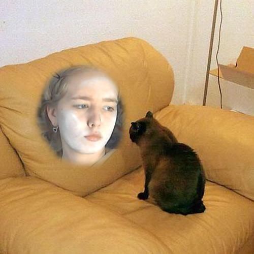 1428506740-staring-cat20150408-29-d8glh2