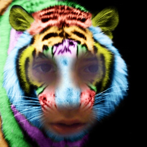 1429292519-rainbow-tiger20150417-15-1vdtvsq
