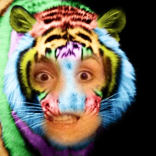 1435791488-rainbow-tiger20150701-12-z16qkh