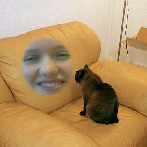 1452855830-staring-cat20160115-12-mc6isi