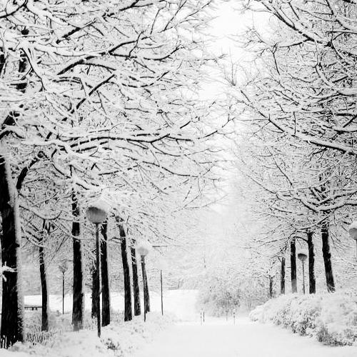1472172191-snowy-day20160826-9-1lmqtz6