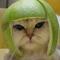 Thumbnail_cute-kitten-1