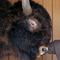 Thumbnail_buffalo