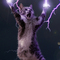 Thumbnail_lightning-cat