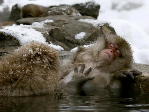 Baños Termales Japon: de nieve combaten el frío con baños de aguas termales en japón
