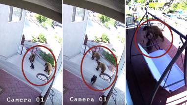 YouTube: Valiente perrita es el terror de tres osos