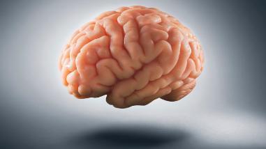 Un fármaco contra el cáncer podría ser útil para recuperar la memoria