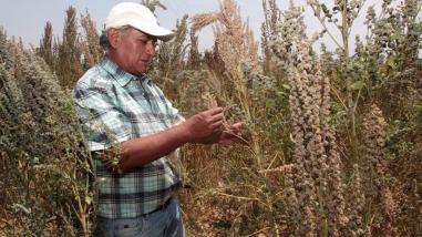 Agricultores liberteños se benefician con programa Procompite