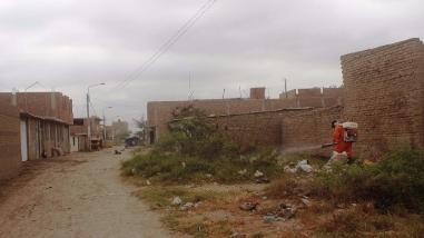 Más de 10 pueblos jóvenes fumigados para prevenir plagas del FEN