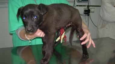 Confirman un caso de rabia canina en la provincia de Melgar