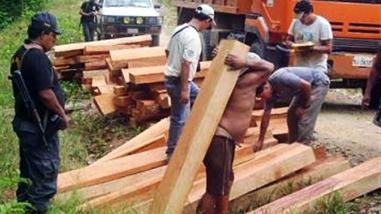 Decomisan 800 tablares de madera en operativo contra la tala ilegal