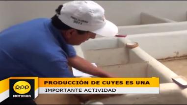Lucio Mercado Gomes se dedica 32 años a la crianza del cuy
