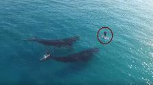 YouTube: Un surfer de remo tuvo un encuentro cercano con dos ballenas