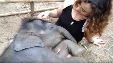 YouTube: Mujer le canta a un bebé elefante