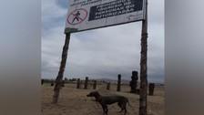 Chorrillos: reportan perro amarrado en plena Panamericana Sur