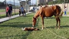 SJL: denuncian maltrato animal en Parque Zonal Huiracocha