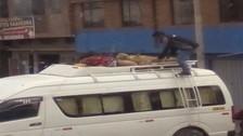 Puno: trasportan ovejas en tolva de minivan