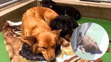Facebook: perro se escapó de jaula para consolar a unos cachorros