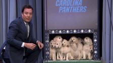 YouTube: estos cachorros 'predicen' quién será el ganador del Super Bowl