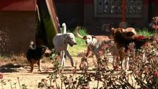Detectan segundo caso de rabia canina en el distrito de Cerro Colorado