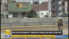 Policía rescata a gatita de vía del Metropolitano