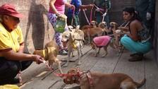 Reos de Estados Unidos rehabilitan en una prisión a perros maltratados