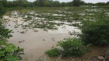 Azángaro: desborde del río Trapiche afectó cultivos de panllevar