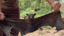 Minsa declara en emergencia región Loreto por brote de rabia silvestre