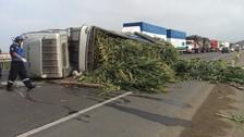 Huaura: camión que transportaba maíz se volcó en Panamericana Norte