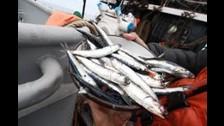 Chimbote: Produce decomisa más de 55 mil kilos de anchoveta
