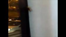 Video: encuentran cucarachas en bus del Metropolitano