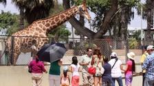 Primeras 50 parejas ingresarán gratis al Parque de las Leyendas