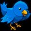 A Blue Songbird