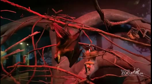 Fruit Bats Behavior