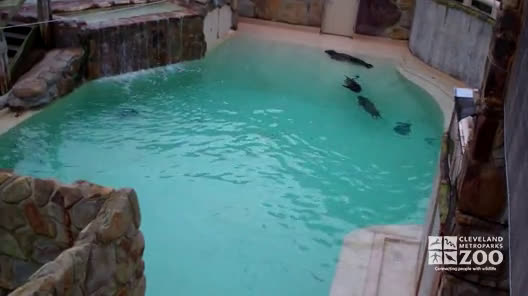 Seals and Sea Lions in Pool