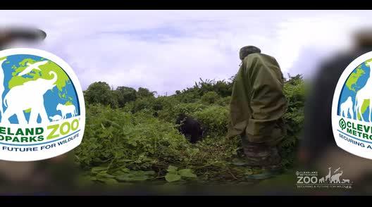 Gorilla 360