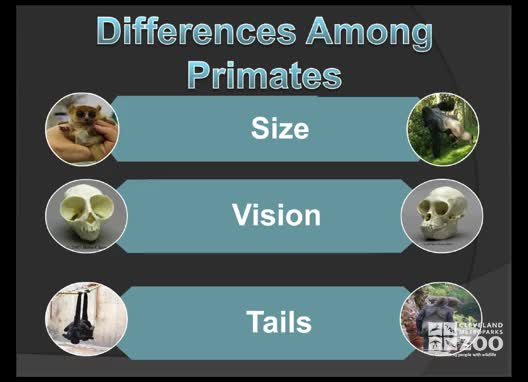 Learning Module - Primates
