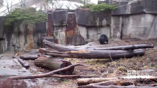 Sloth Bear in Exhibit