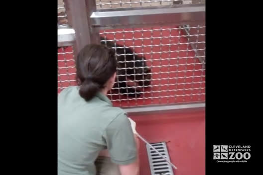 Grizzly Bear Training
