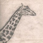 And the Giraffe – Something for Someone artwork