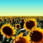 Jazz Pad – BE the Sun artwork