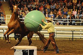 Afbeeldingsresultaat voor scared horse parelli