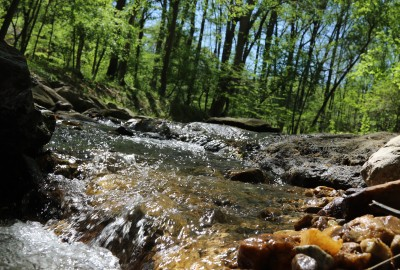 Featured News: Park School Receives $975,000 Grant from the Maryland Department of Natural Resources to Restore Moores Branch