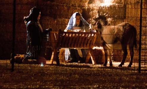 Corticelli's nativity rises from last year's ashes